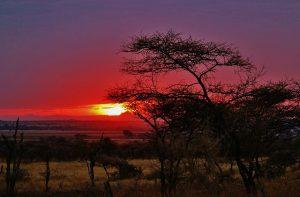 tansania-abend